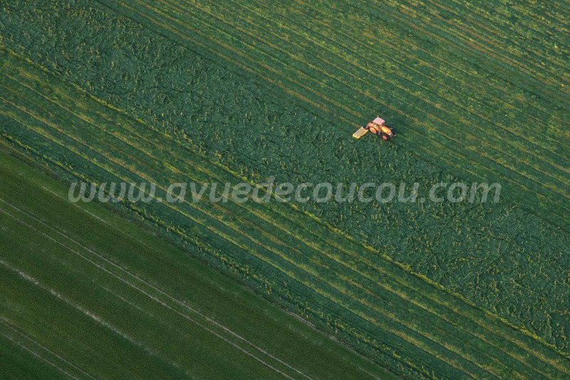 Coupe du ray-grass