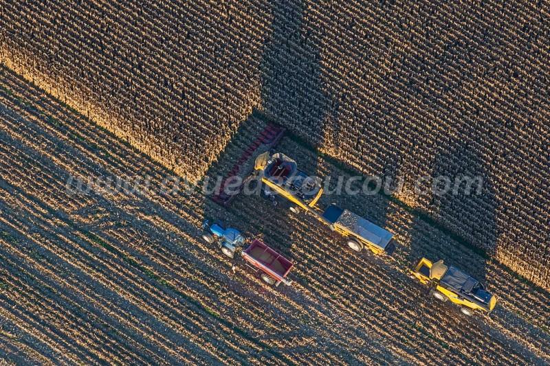 Moisson du maïs - New Holland CR