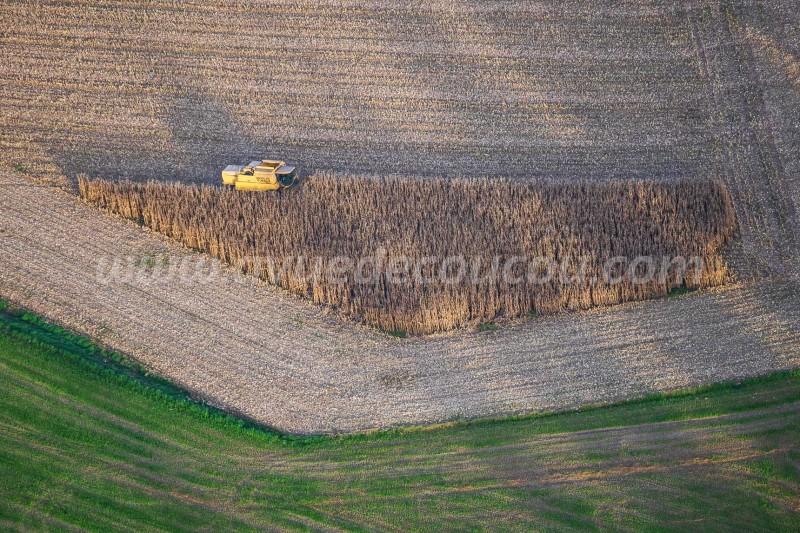 Moisson du maïs - New Holland