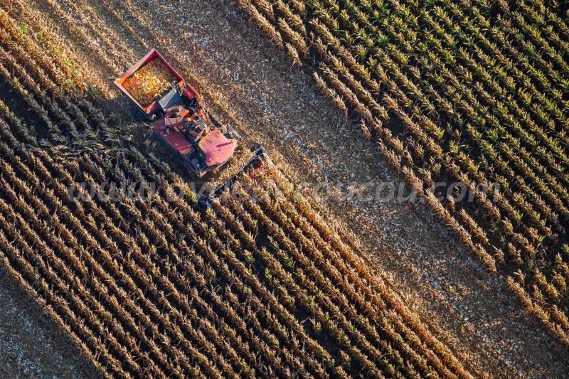 Récolte de maïs cribs