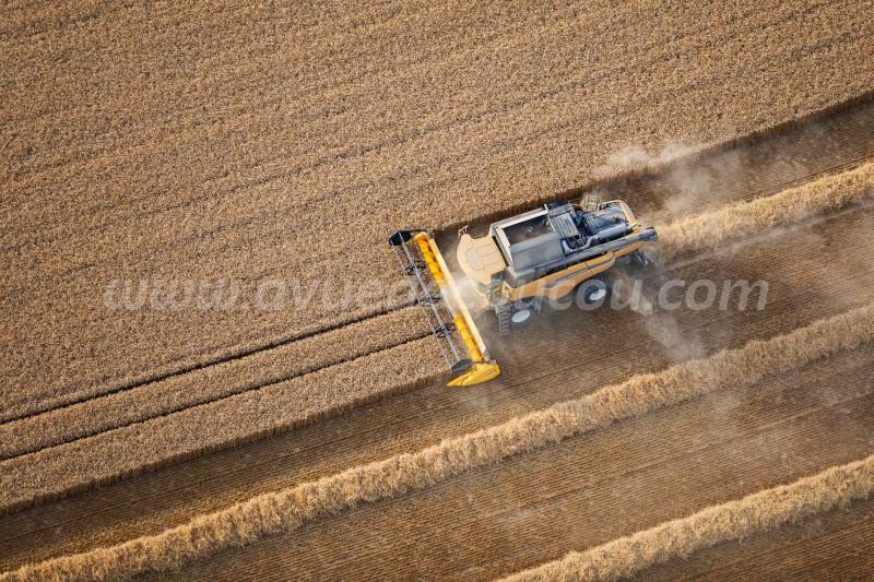 Moisson du blé - New Holland CR