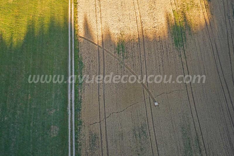 Balle ronde perdue dans les blés