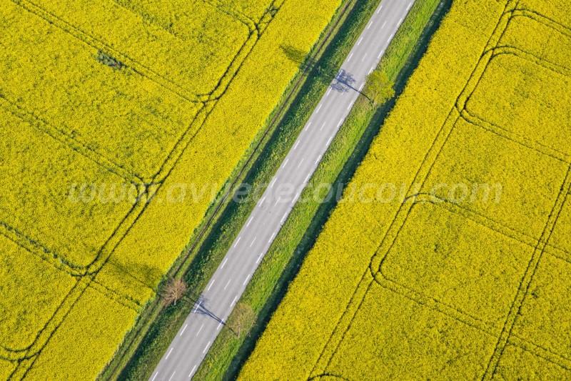 Graphisme printanier entre les champs de colza