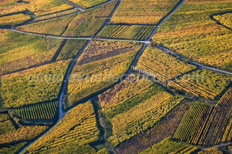 Vignoble de Hatschbourg