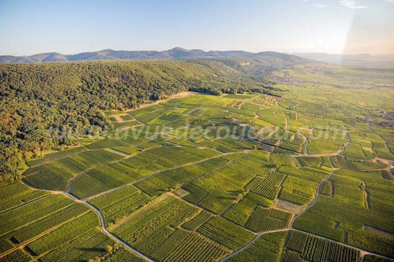 Vignoble de Pfaffenheim