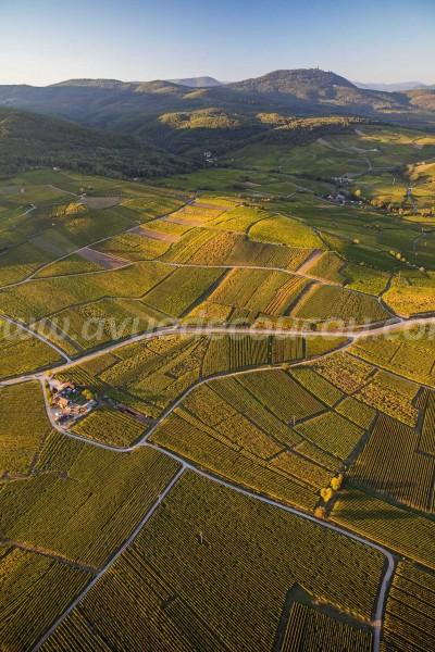 Route des Vins et Haut-Koenigsbourg